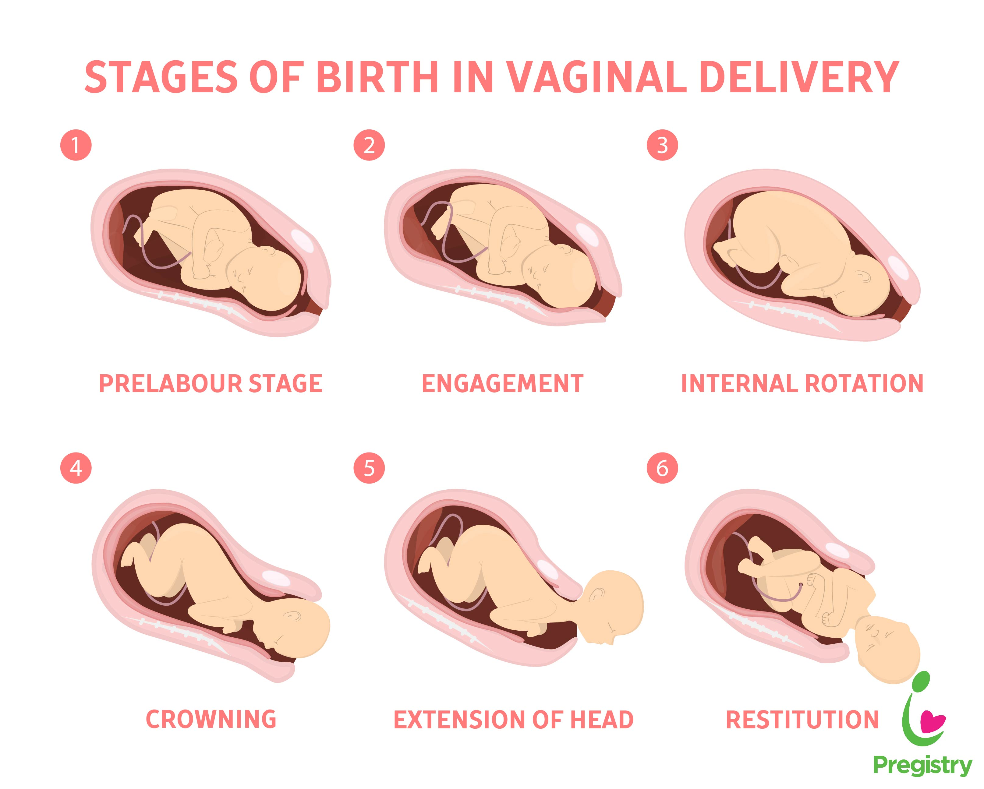 stages of birth | The Pulse