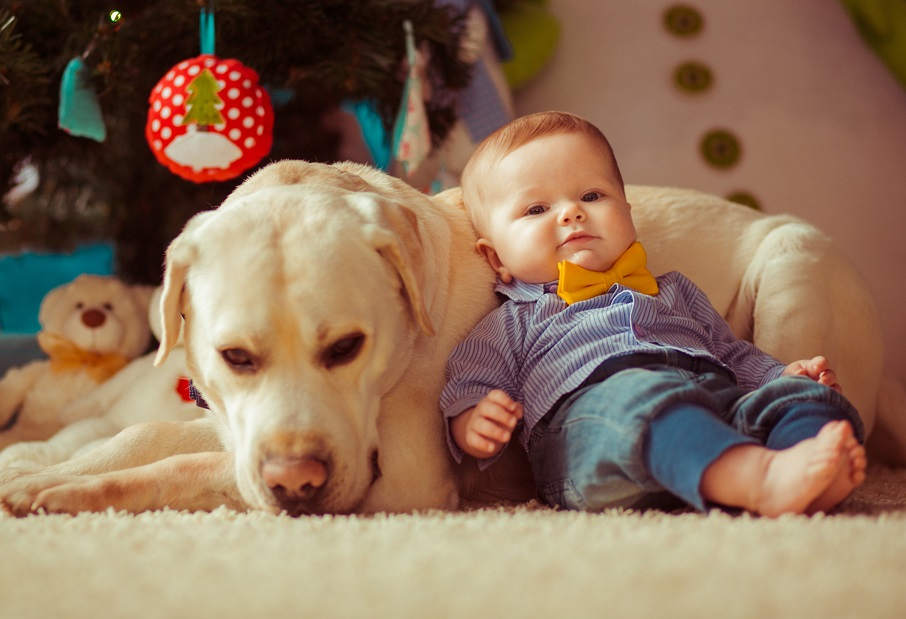 Your Dog and Your New Baby: What a Dog Trainer Wants You to Know